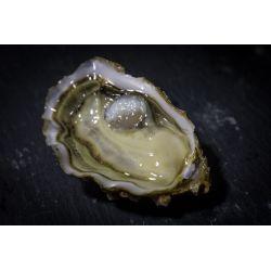 """Huîtres spéciales """"Sélection"""" N°2, vente au kilo ou douzaine, détail ou gros."""
